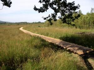 Bohlenweg-2